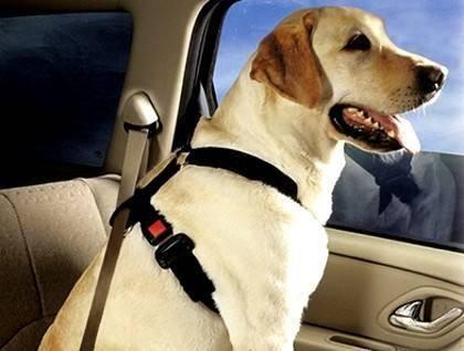 开车带宠物要被罚款,带爱宠外出只能这样委屈了